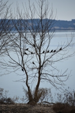 Birds in Tree #2